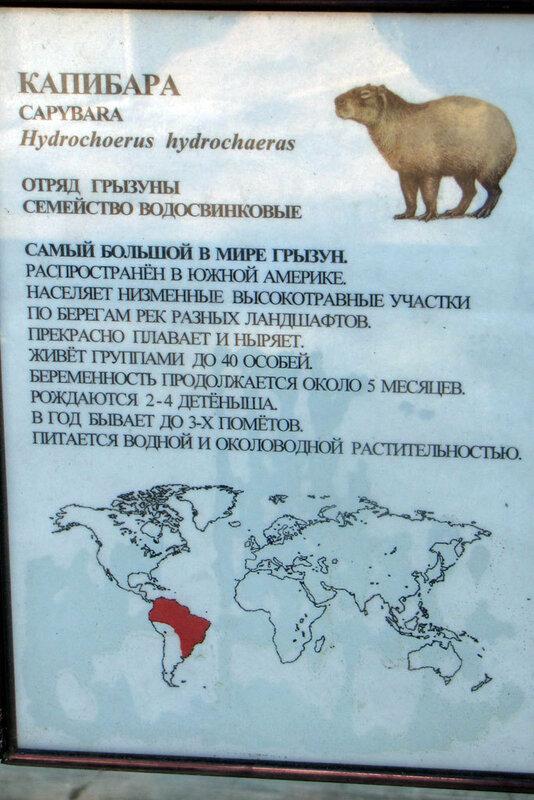 Московский зоопарк, Капибара