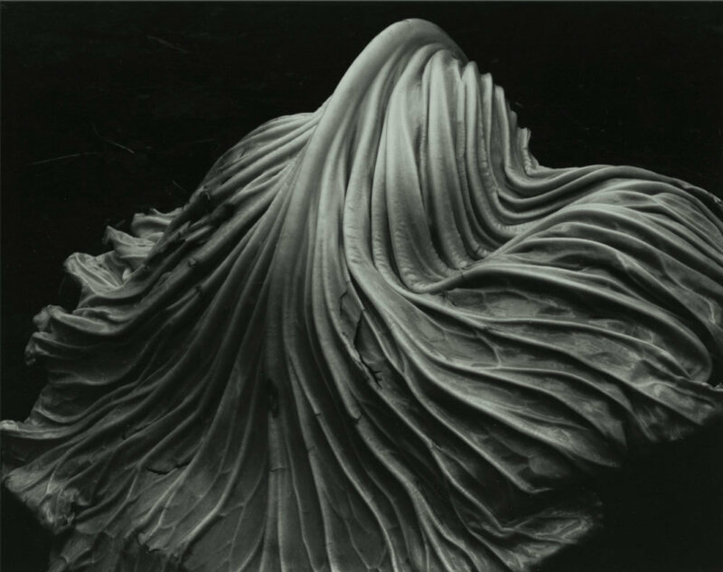 Edward Weston.Cabbage Leaf,1931
