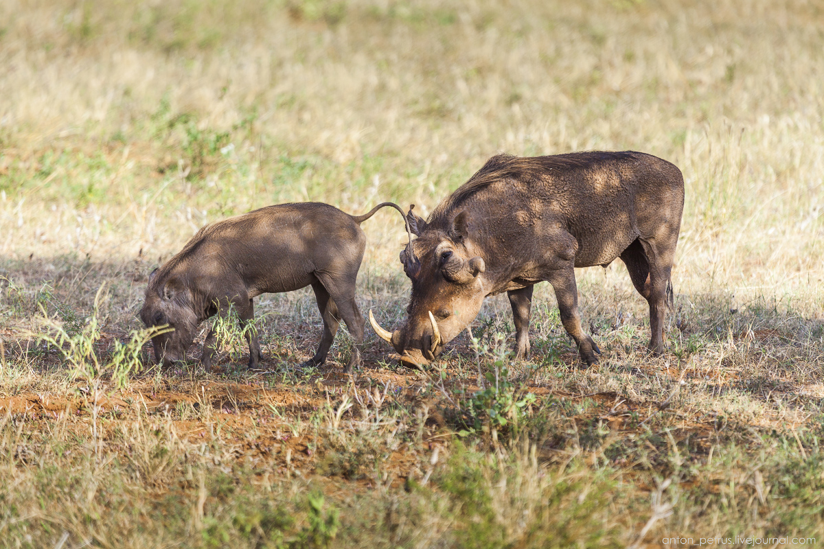 Самбуру, Кения