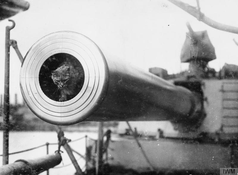 Togo, the mascot of the British Battleship DREADNOUGHT.