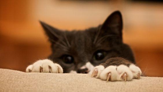 как отучить кошку драть