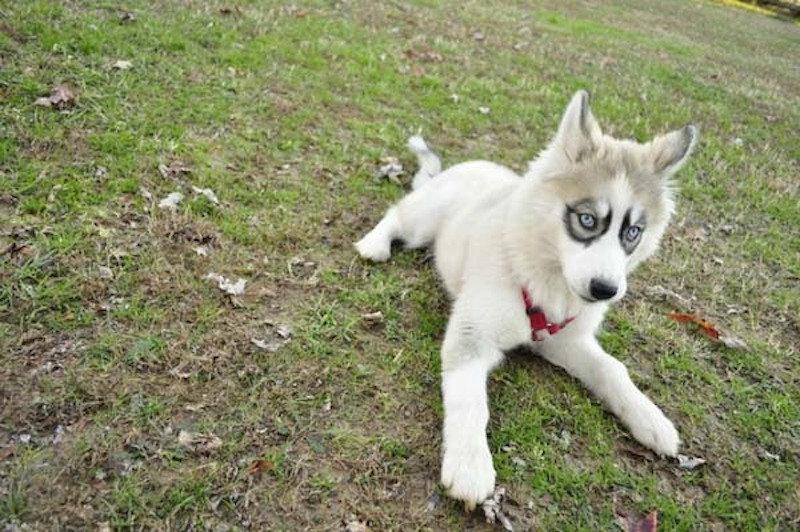 35 собак, получивших удивительный окрас