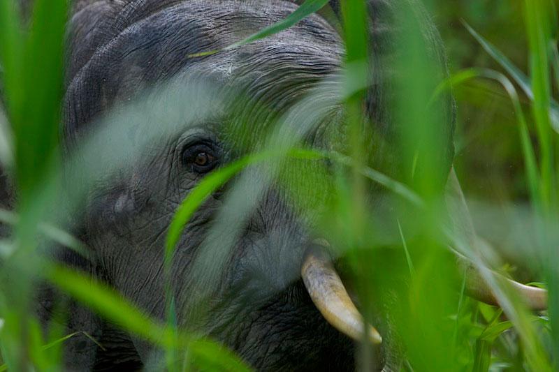Дикие животные - Фотограф Tim Laman