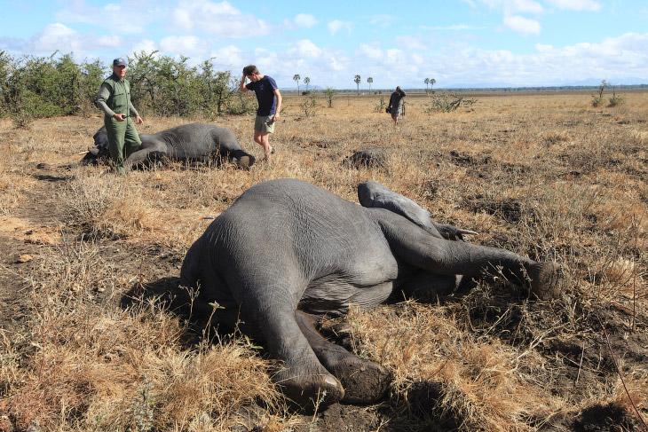 2. Люди захватывают всё новые территории и «выжимают» дикую природу из Африки. Этот вид техногенной