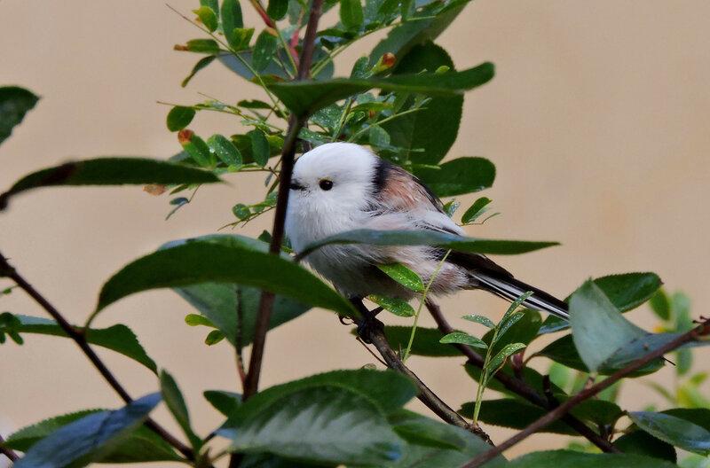 Birdie-cutie