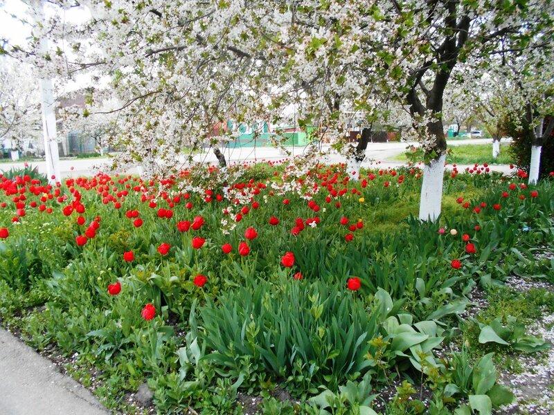 В цвете зелёном и белом, с красными вкраплениями ... DSCN5161.JPG