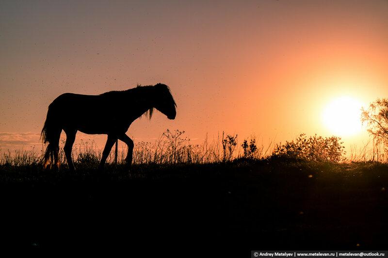 силуэт лошади на рассвете