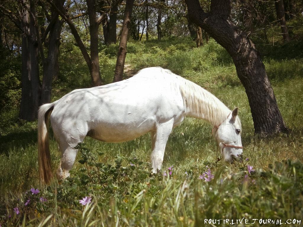 Выйде летом в поле с конём...