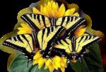 бабачк-Крылья-ангела-(3).png