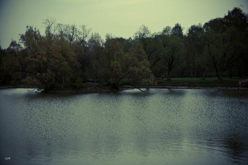 Пруд с фонтаном и утиный островок