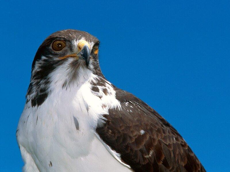 Волшебные птицы (45 отличных фото на рабочий стол) 0 312b7 528b4141 XL