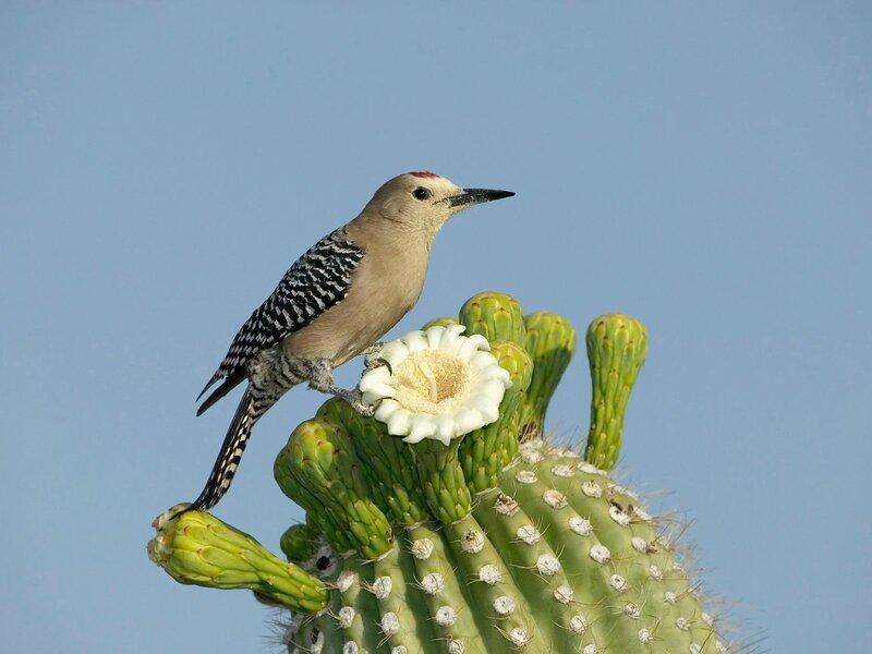 Волшебные птицы (45 отличных фото на рабочий стол) 0 312d0 3aae64da XL