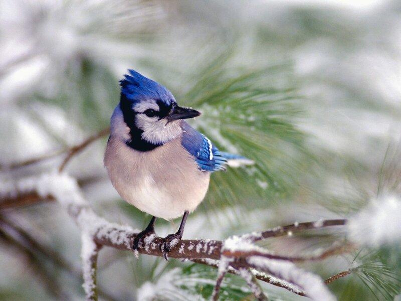Волшебные птицы (45 отличных фото на рабочий стол) 0 312d8 d4effad1 XL