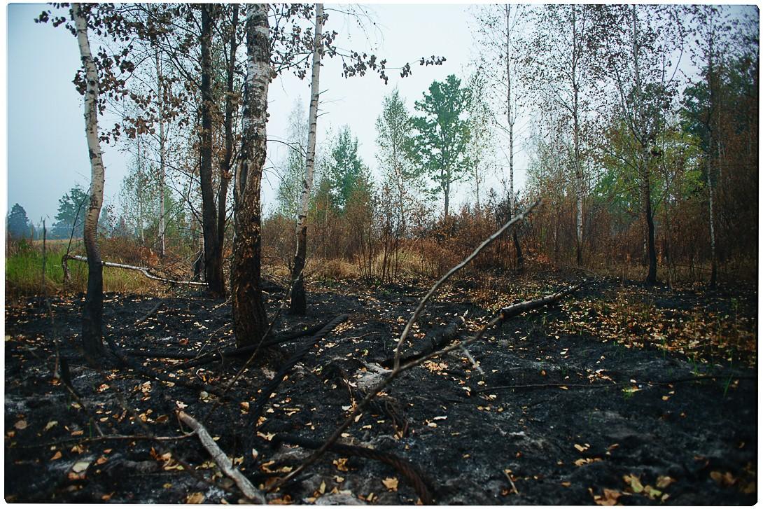 фотографии леса. красивые. фотограф Кузьмин