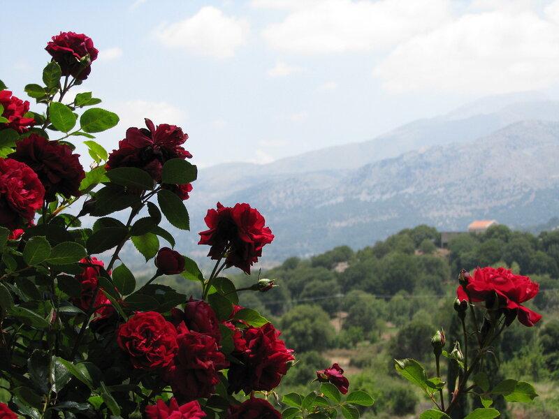 Розы в горах