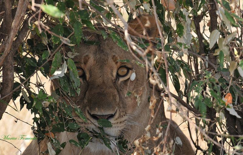 Кения, национальный парк Масаи Марра