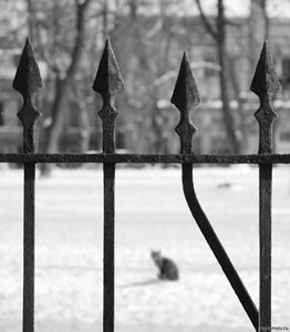 Кошка за решеткой (зима, кот, монохром, решетка)