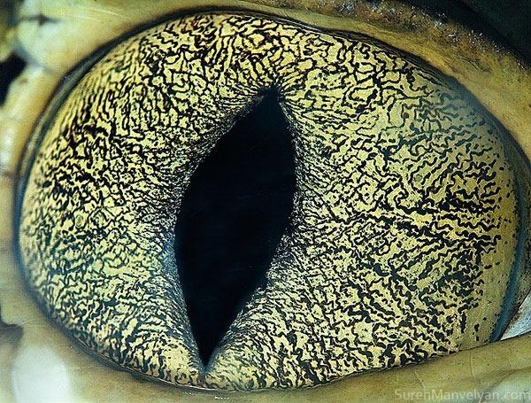 Сурен Манвесян. Фотографии глаз животных крупным 0 122fc2 98034b46 orig