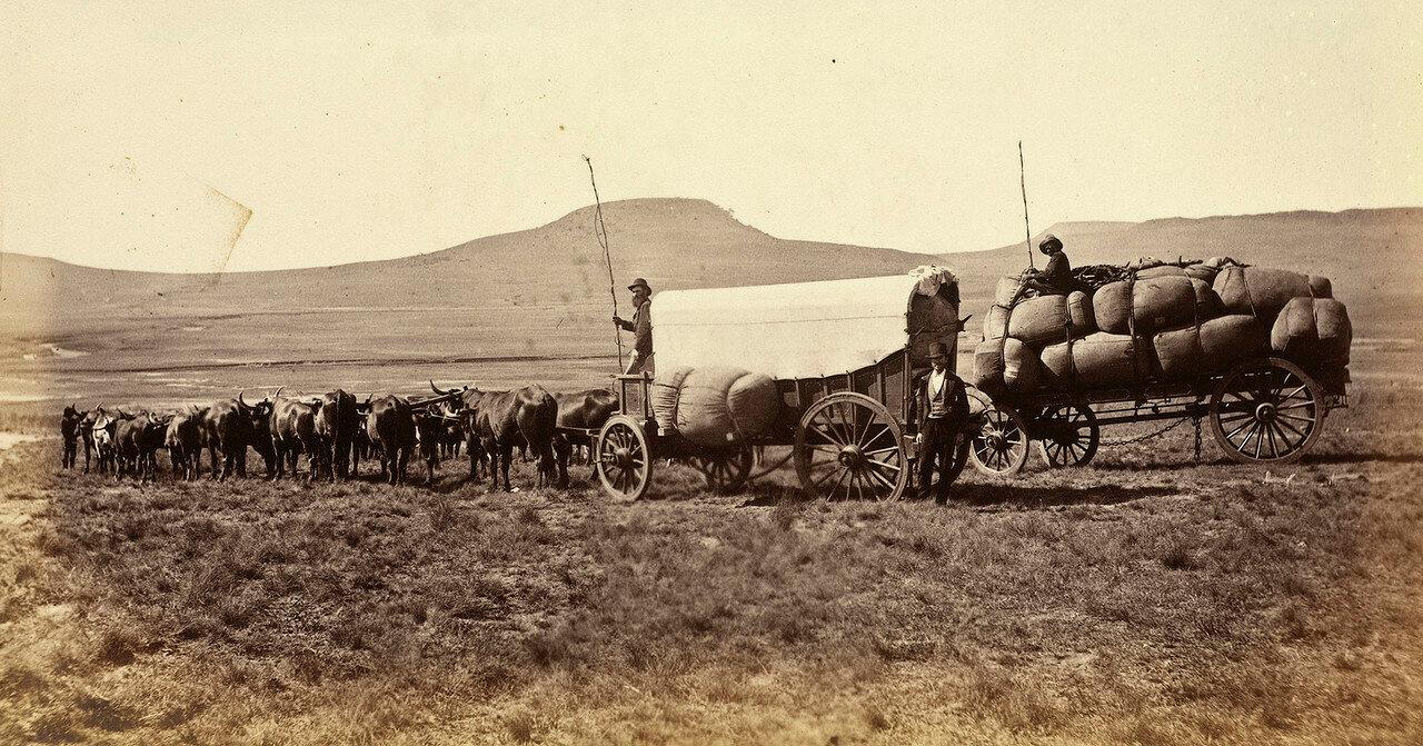 Фургоны пересекают болотистую местность в колонии Наталь