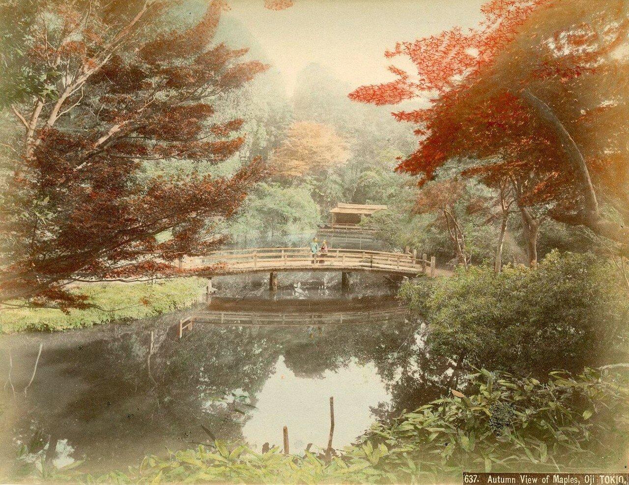 Токио, Оджи. Осенние клены