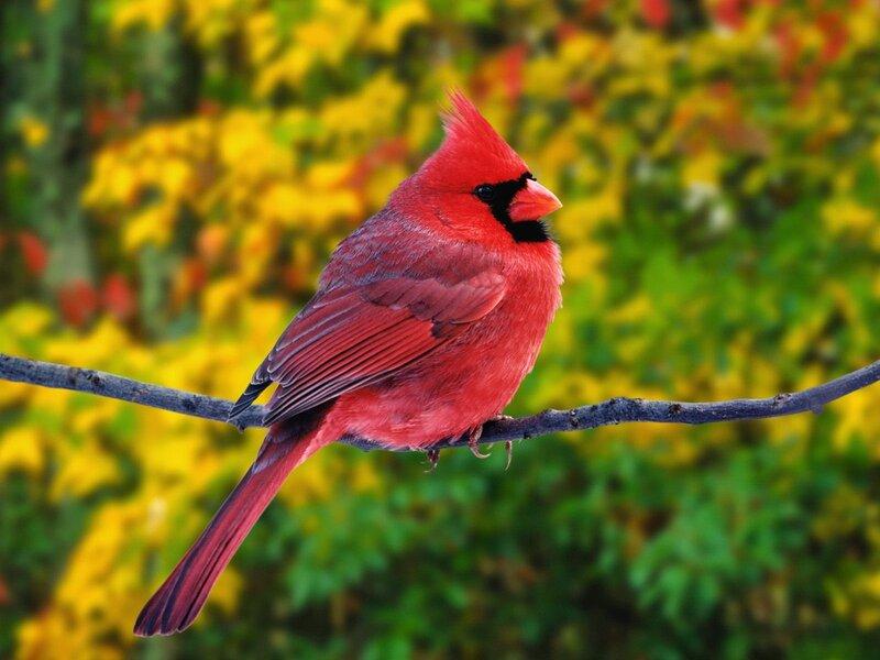 Волшебные птицы (45 отличных фото на рабочий стол) 0 312ae 5a648643 XL