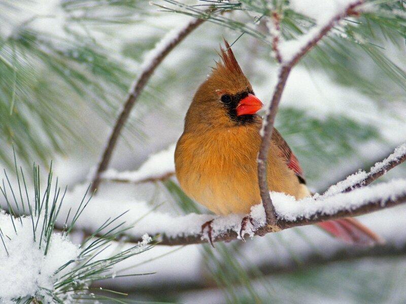 Волшебные птицы (45 отличных фото на рабочий стол) 0 312b0 503f7ef9 XL