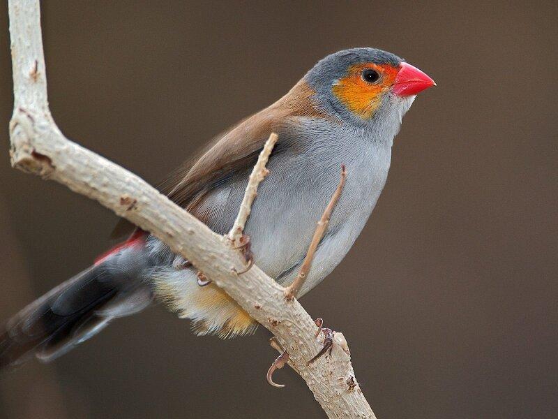 Волшебные птицы (45 отличных фото на рабочий стол) 0 312b4 a81d01b7 XL
