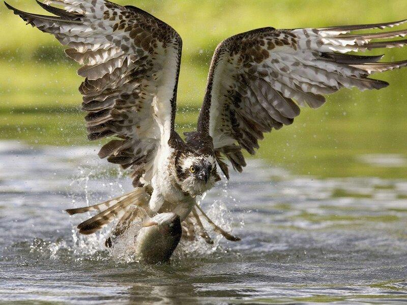 Волшебные птицы (45 отличных фото на рабочий стол) 0 312b5 5ef4602 XL