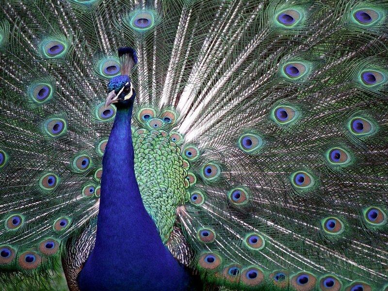 Волшебные птицы (45 отличных фото на рабочий стол) 0 312ce 365e41d3 XL