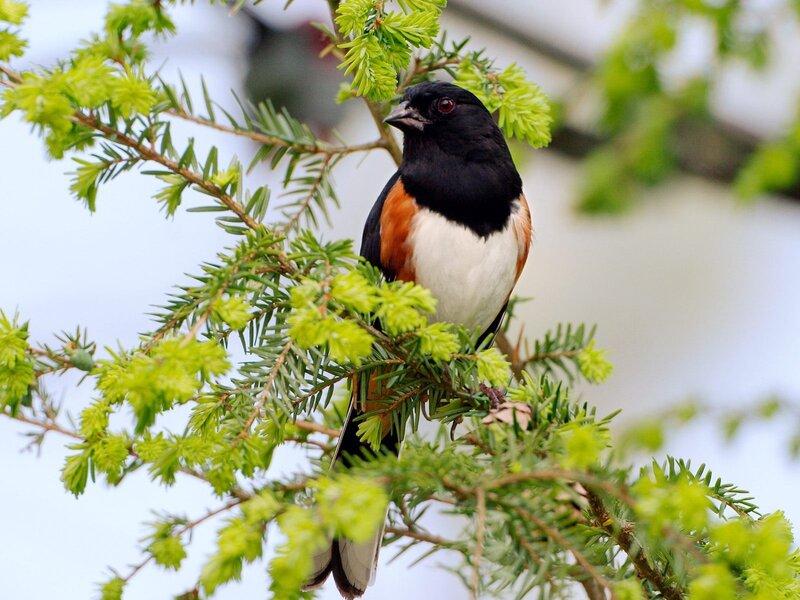 Волшебные птицы (45 отличных фото на рабочий стол) 0 312da d58e9ddb XL