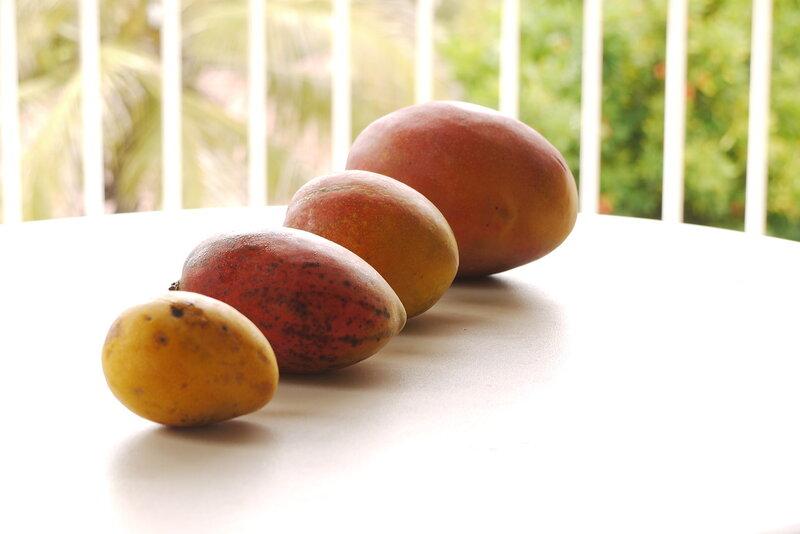 4 mangos