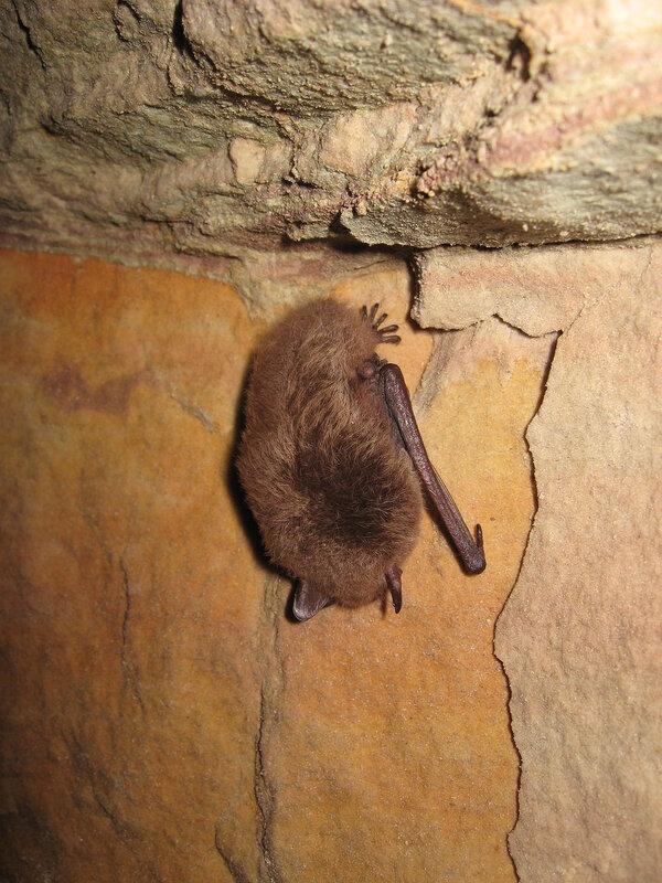 Летучие мыши в пещерах Старой Ладоги.