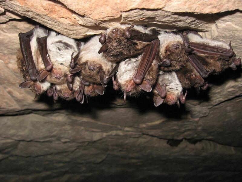 Поездка в пещеру Старой Ладоги.