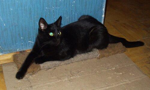 Кошка черная