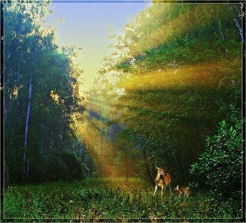 Вставшие на путь осознания законов Природы и духовного совершенства...