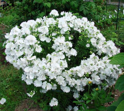 Флормастер — цветы букет дизайн