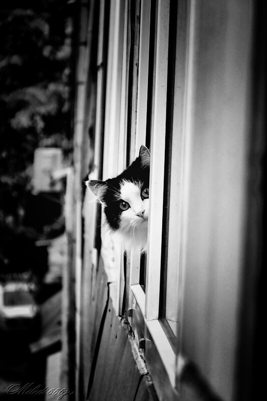 Привет, сосед! Таранку не одолжишь к молоку?