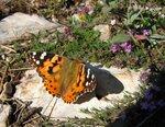 Бабочка на Ай-Петри