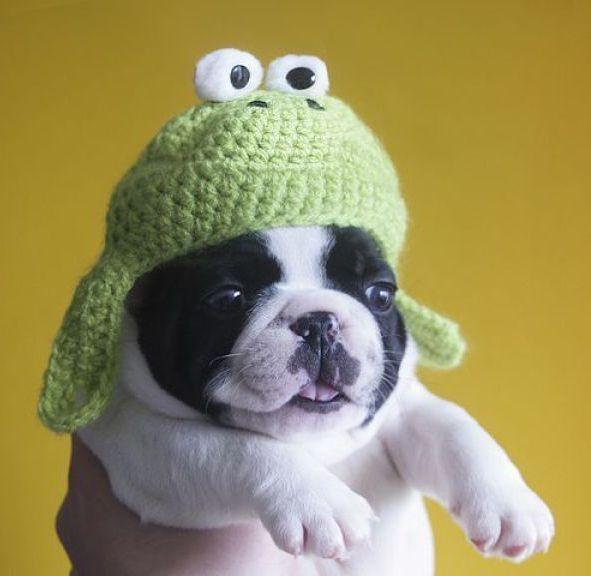 идиотская собака