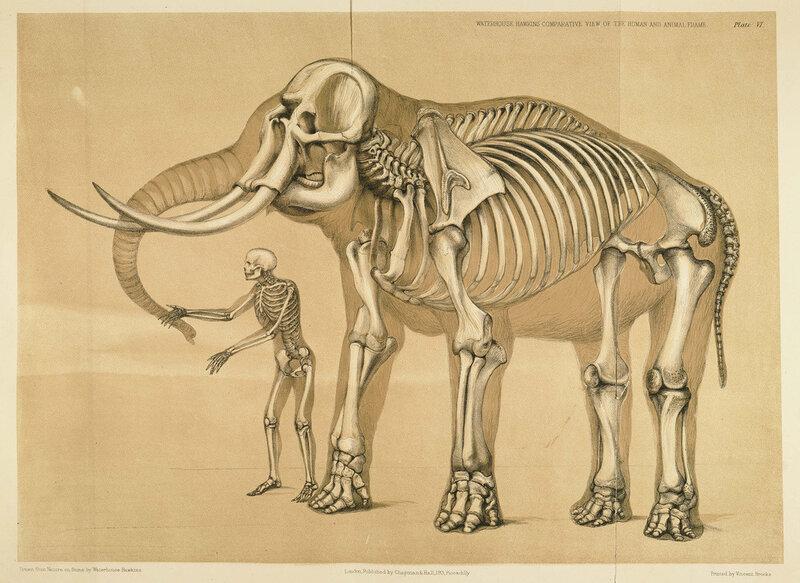 human_and_elephant_frame,Benjamin Waterhouse Hawkins, 1860
