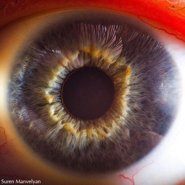 Макро фото глаз людей и животных.