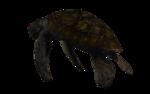 морская черепаха (7).png
