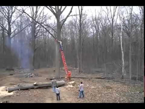 Дерево мстит