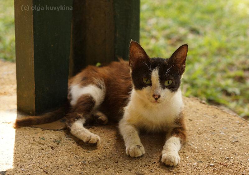 Грустная кошечка в ботсаду Маврикия