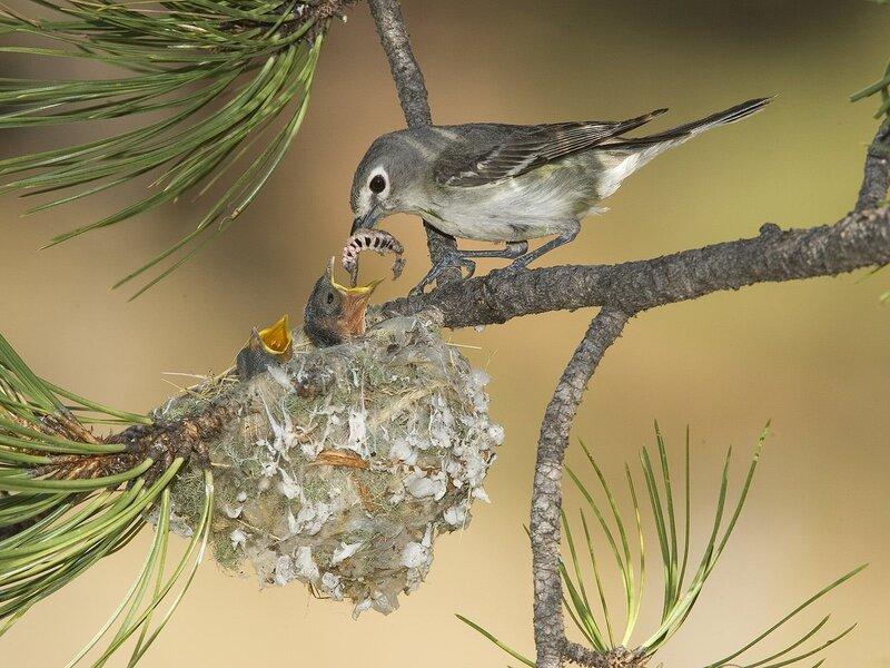 Волшебные птицы (45 отличных фото на рабочий стол) 0 312b3 5627f22b XL