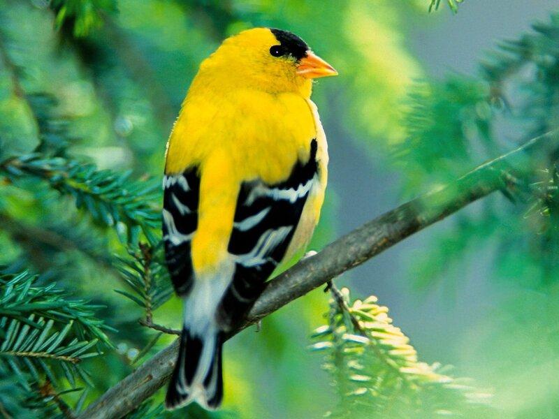 Волшебные птицы (45 отличных фото на рабочий стол) 0 312d3 576ad220 XL