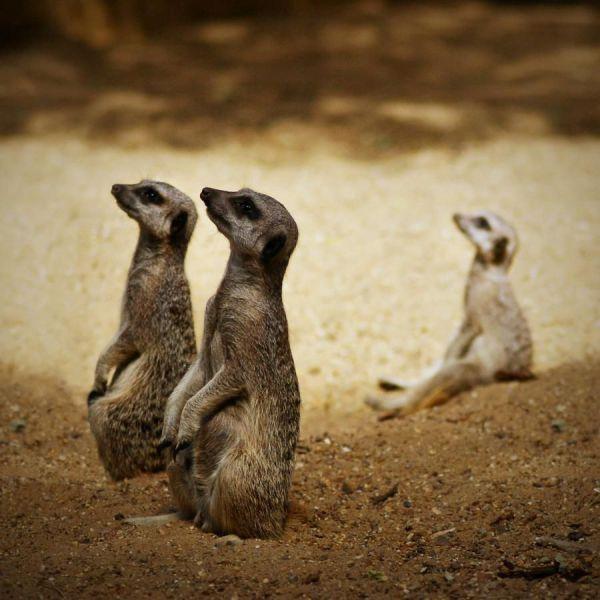 Эти забавные животные (фото). Чтобы понедельник не был тяжелым днем