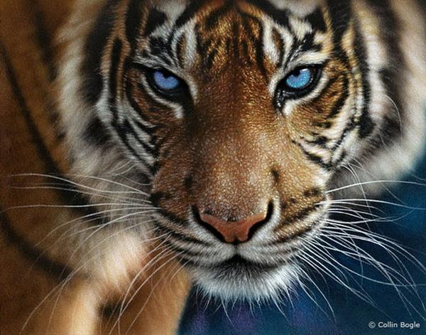 Картины дикой природы Коллина Богла