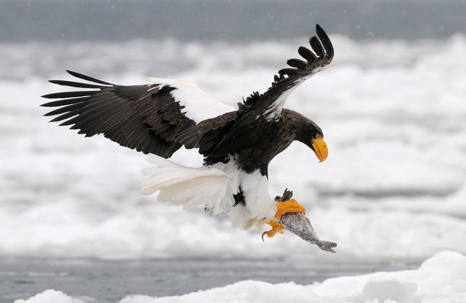 Животные и птицы Гэрри Эддженса (14 фото)