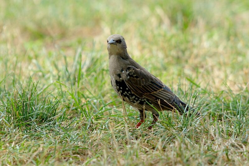 Вашингтонские птицы